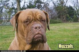 Frowning Dog Meme - pip pip and all that i has a hotdog dog pictures funny