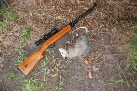 airgun hunting mikestexashunt fish com