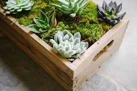 succulent centerpieces make these succulent boxes for your centerpieces
