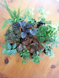 all about terrariums tallahassee com community blogs