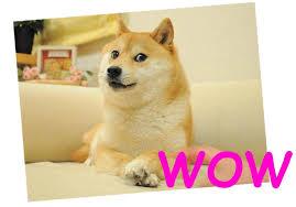 Doge Wow Meme - wow scare amaze matter medium