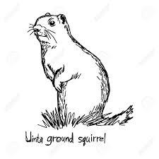 uinta ground squirrel vector illustration sketch hand drawn