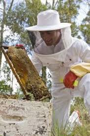 Backyard Beehive Bee Keeping Advice This Blog Also Discusses Raising Chickens
