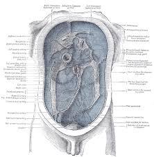 Anatomy The Human Body Xi Splanchnology 2e The Abdomen Gray Henry 1918 Anatomy Of