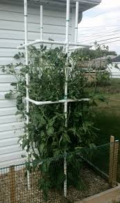 diy tomato plant cage from pvc pipe rebar inside 4 corners for