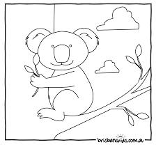 drawn koala colouring pencil and in color drawn koala colouring