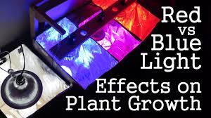 experiment red light vs blue light how spectrums affect plant
