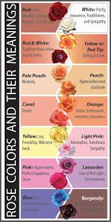 wedding flowers meaning 12 meaning which color represents your relationship best
