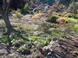 plants for rock gardens i need a cup of tea revisiting british columbian rock gardens