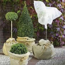 balkon und terrassenpflanzen und terrassenpflanzen winterfest machen