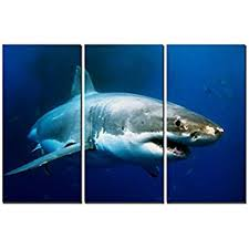 amazon com battle scarred great white shark oil painting on