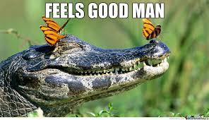 Alligator Memes - alligator memes best collection of funny alligator pictures