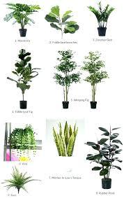best plant for desk best flowers for office desk good plants ideas large size of cubicle