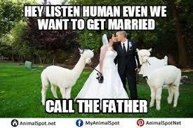 Alpaca Memes - images of alpaca memes different types of funny animal memes
