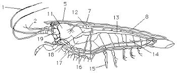crayfish dissection worksheet crayfish dissection worksheet