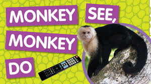amazing animals monkey see monkey do
