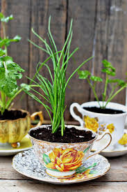 Herb Garden Planter Ideas by Inspiring Low Budget Unique Ideas For Herb Containers U2026 Eco Snippets