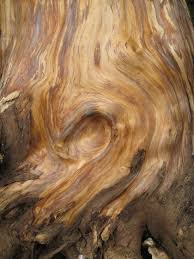 wood grain by x emmalyn x on deviantart