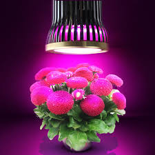 epistar led grow light e27 e26 15w full spectrum led grow lights 12x epistar chips led grow