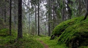 Vermont forest images Trail building arborscape llc pomfret vermont tree service jpg