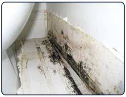 Removing Mold From Bathroom Ceiling Remove And Get Rid Of Mold In Bathroom Wall Orange Mold