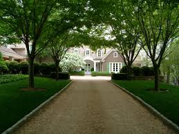 gravel drive and zelcova allee to residence landscape gravel drive and zelcova allee to residence landscape architecture by howard design studio