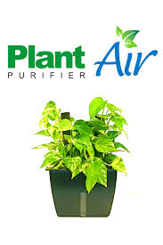 Best Plants For Air Quality by Wolverton Environmental Services