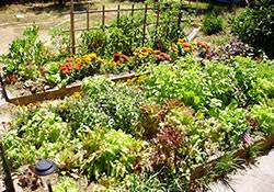 vegetable gardening in the mountains 7 248 extensionextension