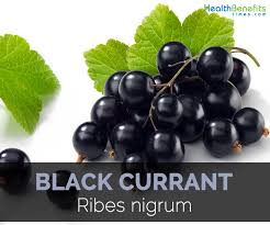black currant facts and health benefits