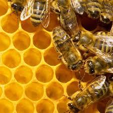 bee removal and relocation mt vernon u0026 mt pleasant tx