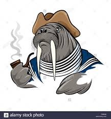 walrus illustration stock photos u0026 walrus illustration stock