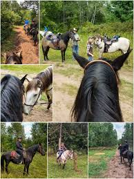 gaited versatility naturally gaited