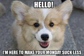 Cute Puppies Memes - 12 best corgi memes of all time