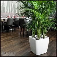 self watering indoor planters modern indoor planters self watering indoor planters