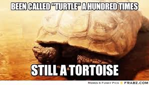 Tortoise Meme - story of my tortoise s life from frabz com it s a shelled life