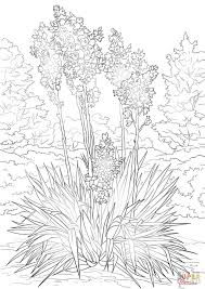 yucca flower coloring page free printable coloring pages