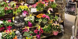 flower shop knapp kamloops flower shop