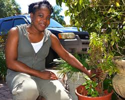 native plants of south florida how plants tell the story of florida u0027s immigrant history wlrn