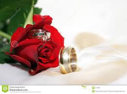 beautiful rose rings images Red rose with wedding rings stock image image of beautiful jpg