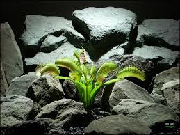 faux reptile plant terrarium plant venus flytrap from ron beck