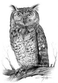 102 best owls images on pinterest owls face drawings and owl