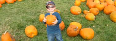 best fall events and halloween activities in the twin cities gateway