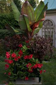 Tropical Potted Plants Outdoor - 8554 best container gardening images on pinterest plants pots