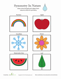 symmetry in nature worksheet education com