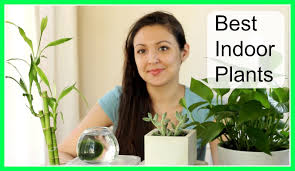 best indoor plants youtube
