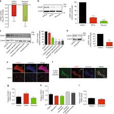 a post transcriptional program coordinated by csde1 prevents