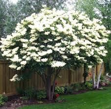 best blossom tree for small garden evergreen flowering trees for