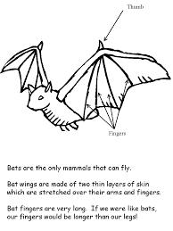 bat facts coloring book preschool classroom