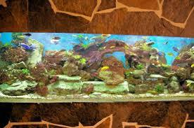 chambre aquarium chambre st jean de luz picture of maison uxondoa sur