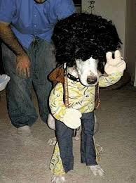 Crazy Halloween Costume Crazy Halloween Costumes Dogs 17 Pics Picture 9